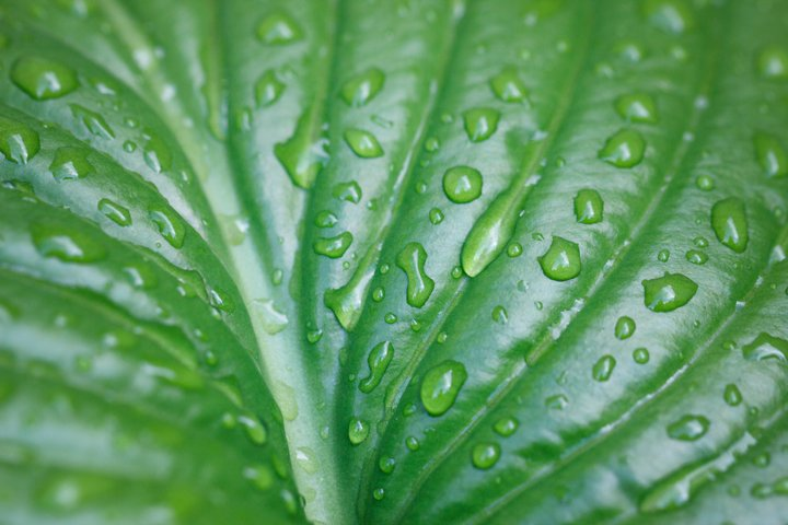 texture of a large leaf of an exotic plant with drops