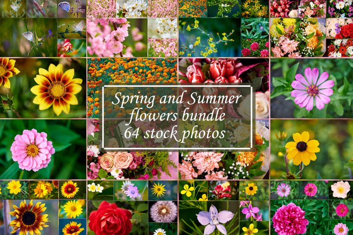 Spring and summer flowers bundle 64 stock photos.