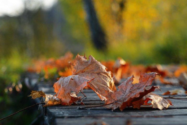Autumn, morning, bridge, water, leaves, light, summer, lake