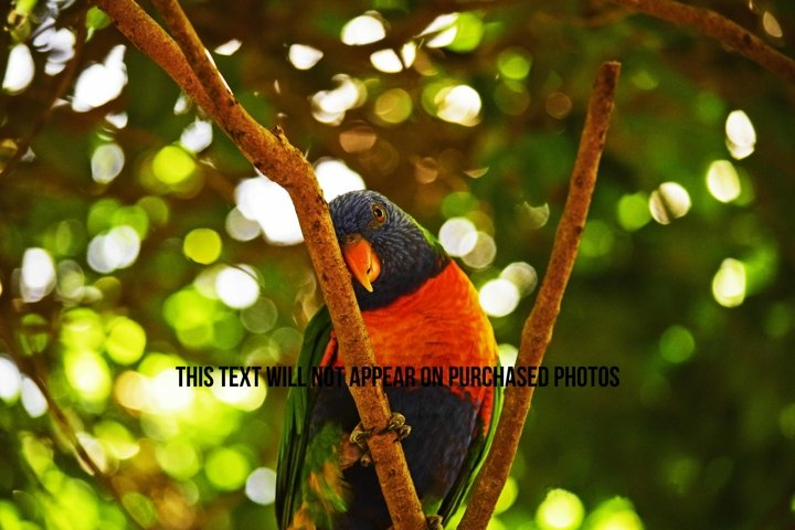 9 Beautiful Birds example 5