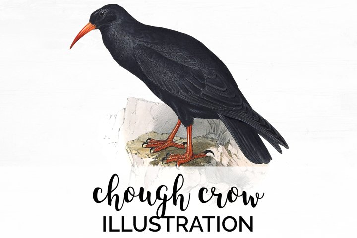 Crow Clipart Bird