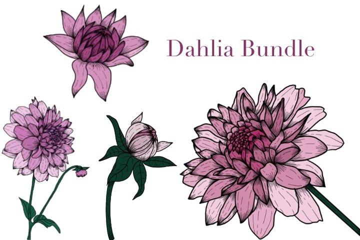 Dahlia Floral Bundle. PNG Clipart. Illustrations