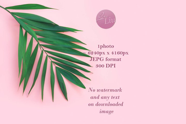 Minimal tropical green palm leaf on pink paper background