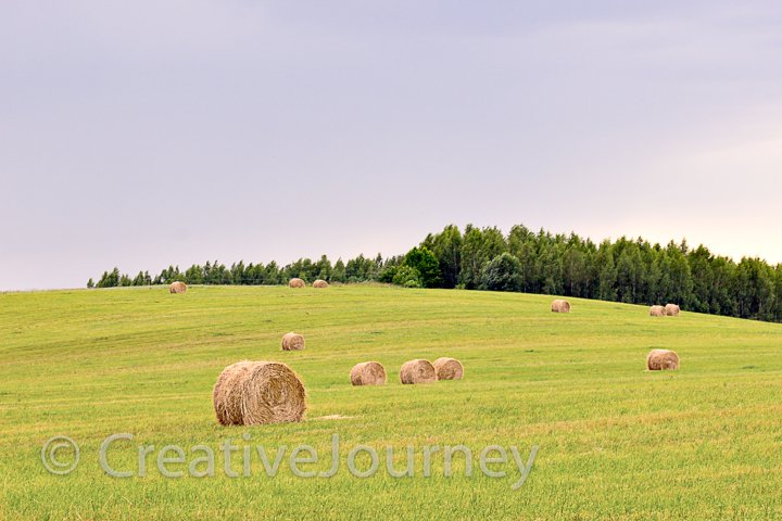Summer field with hay.