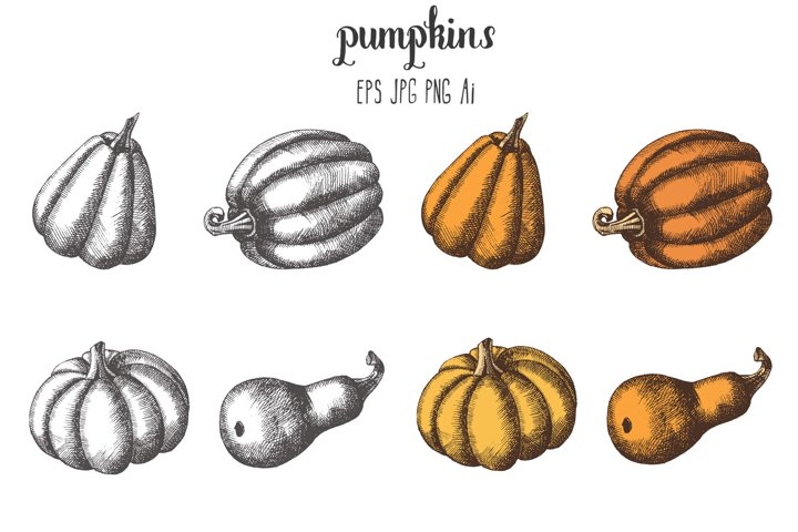 Vector Pumpkin Set.