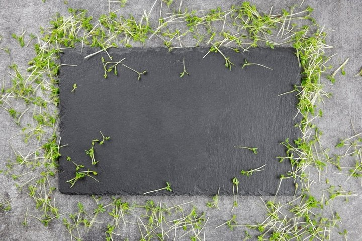Natural black slate stone, with microgreens of watercress.