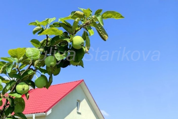 Banner with a branch of apple and blue sky with copy space.