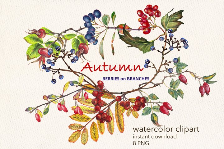 Autumn blue & red berries on branches. Watercolor clipart.