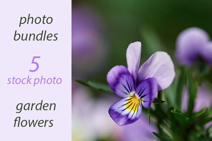 garden flowers. stock photo bundles