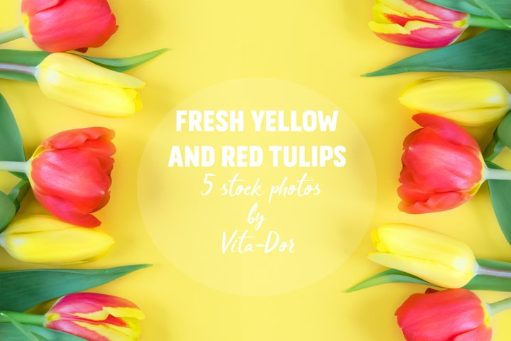 Fresh red and yellow tulips on a yellow background