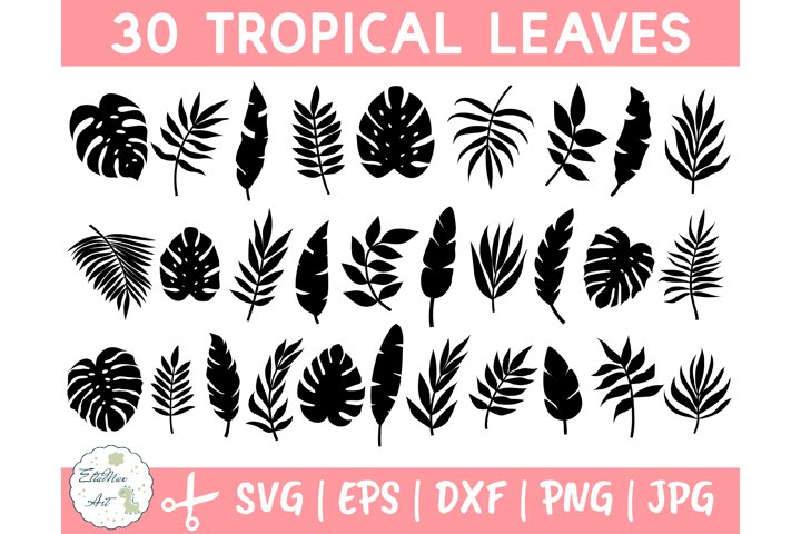 Tropical Leaves Svg Bundle, Palm Leaves Svg, Jungle leaves