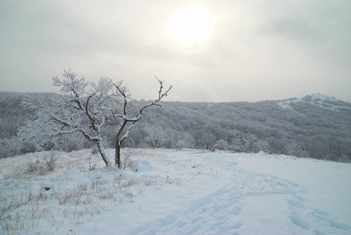 Winter landscape- icy forest with beautiful trees