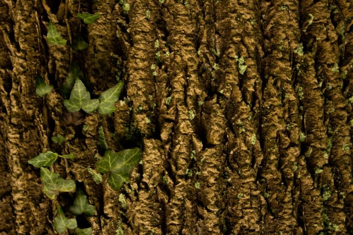 Tree With Ivy Stock Photo