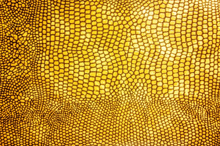 Close Up of Abstract Gold Real Snake Skin Snake Print
