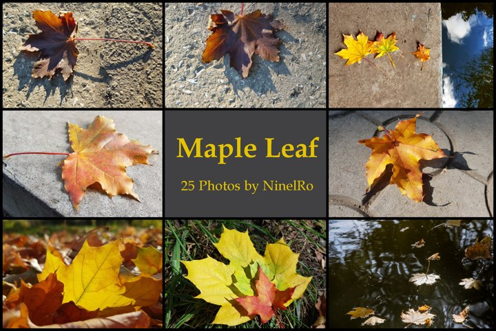 Set of 25 Autumn Photo Backgrounds with Maple Leaf