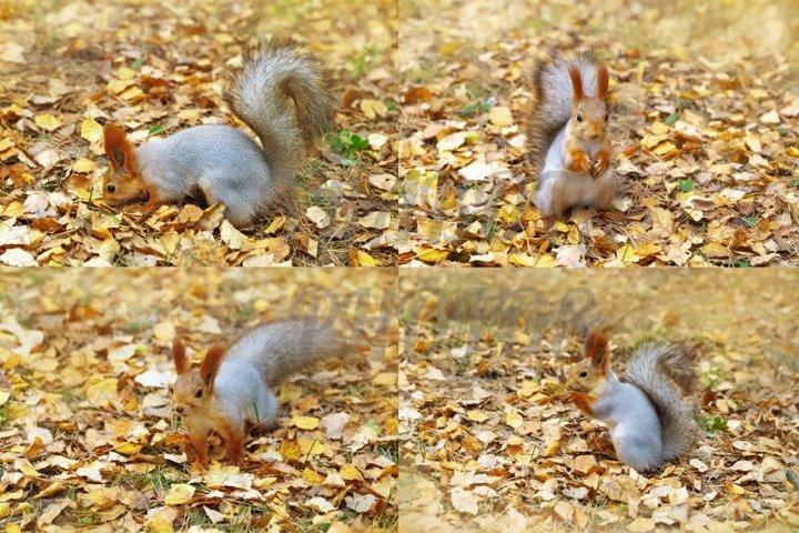 Cute fluffy squirrel at autumn time