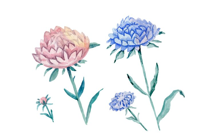 Watercolour aster flowers