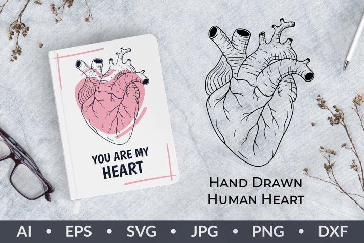 Human heart clipart svg, ai, eps, png, hand drawn