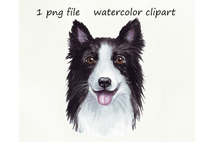 Watercolor dog png, Border Collie, hand drawn