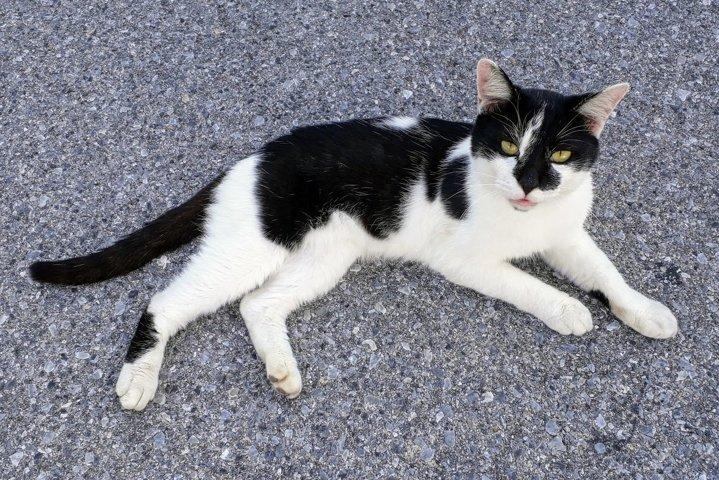 Cat photos Black White Cat