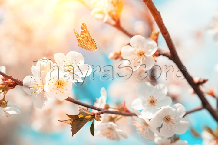 Blossoming cherry branches against blue sky