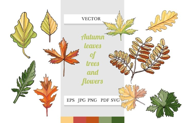 Autumn leaves clipart. Leaves SVG. Fall leaves art.