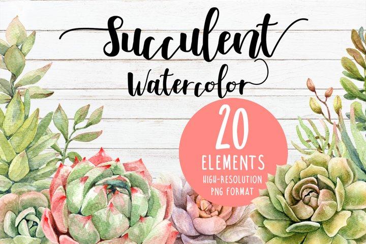 Watercolor succulent, cactus, cacti clipart elements