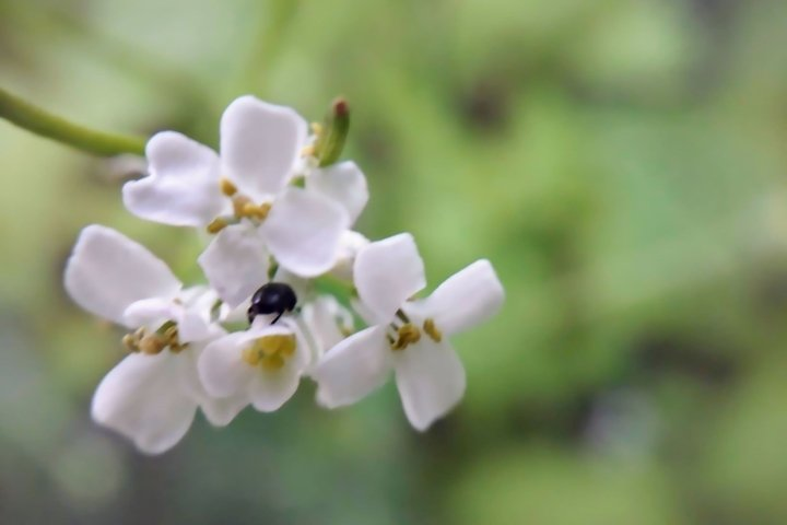 White flowers Insect Botanical Floral