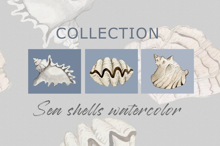 Watercolor set of sea shells PNG