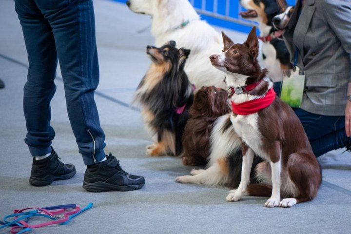 Cute dogs of different breeds at the exhibition