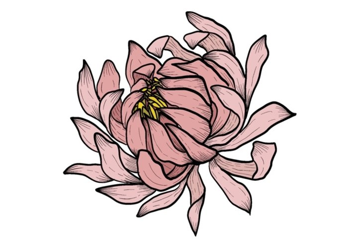 Peony PNG graphic. Clipart or Sublimation