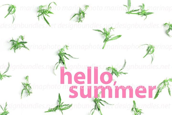 Hello, summer. the minimalistic floral concept