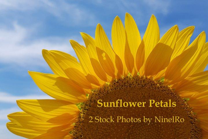 Sunflower Petals. Set of 2 Summer Flower Photo Backgrounds