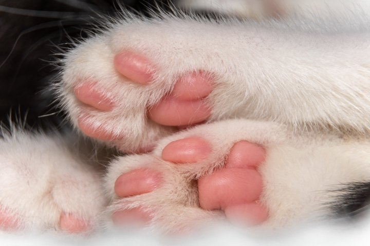 White paws of a cute domestic cat