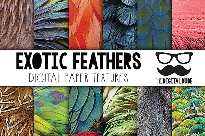 Exotic Feathers - Digital Paper Set of 12 Images