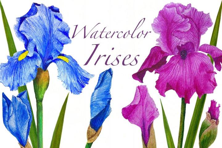 Watercolor flowers irises