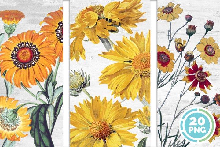 Sunflower Bundle Yellow Flowers Vintage Clipart