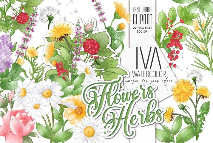 Flowers and herbs Floral Clipart,Rose Camomile Rooibos Mint