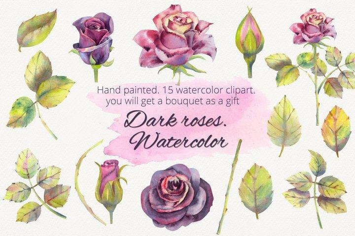 Dark roses. Watercolor clipart