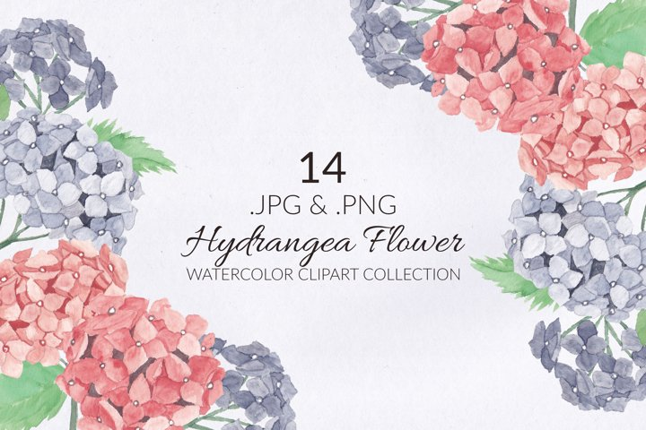 14 Hydrangea Flower Watercolor Illustration Set