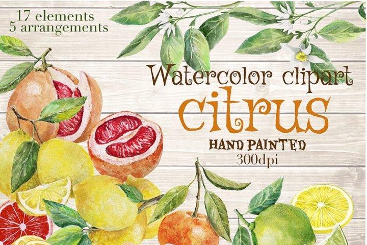 Citrus fruits watercolor clipart.Fruits arrangement.
