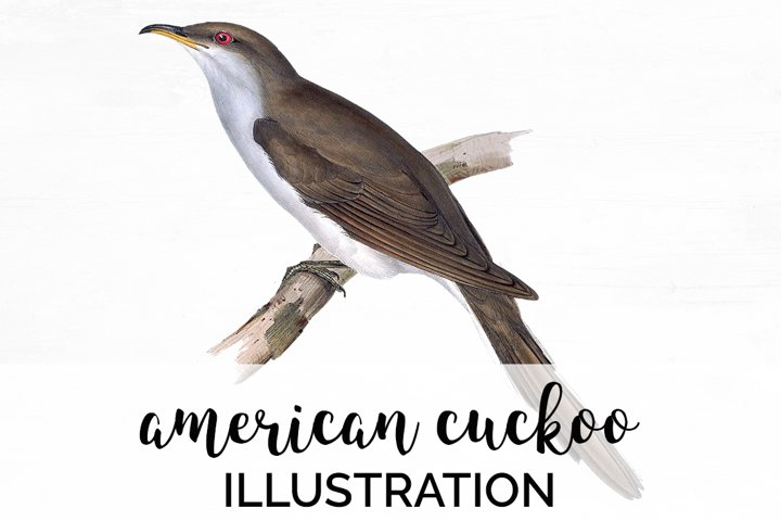 Bird Clipart Cuckoo
