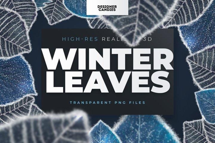Winter Leaf PNGs