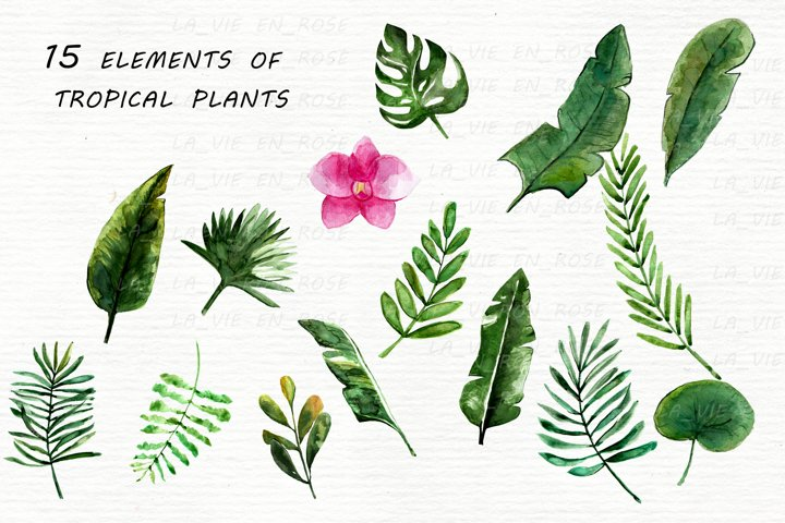 Watercolor clipart with tropical leaves. example 7