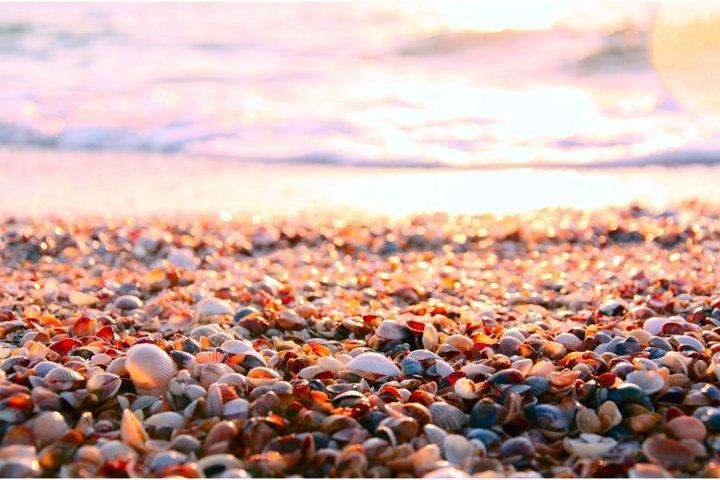 Seashell beach in morning sunlight. Summer sea background