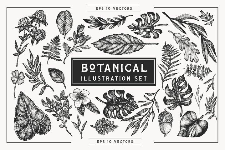 Botanical Vector Illustration Set