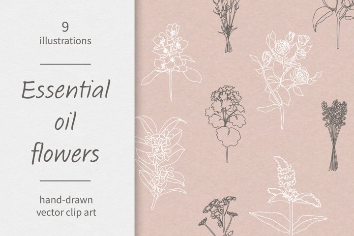 Essential oils / Flowers / Vector / Clip art / Line art