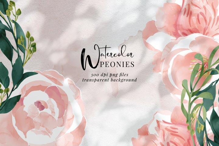 Watercolor flowers, Peony, botanical drawing, wedding art