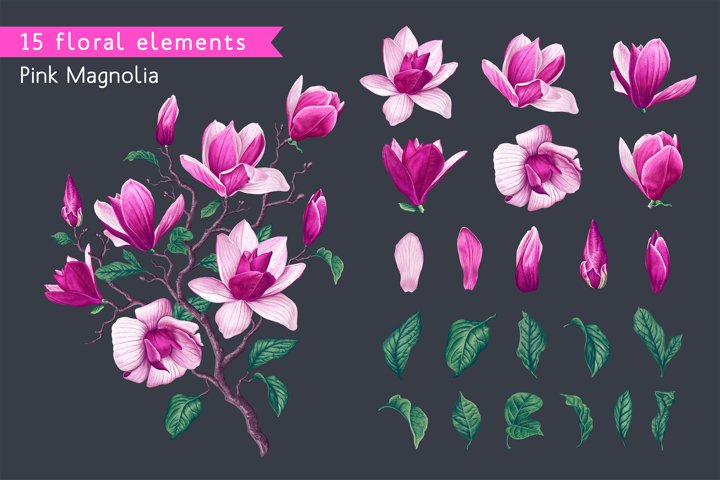 Vector Realistic Pink Magnolia Flowers Set
