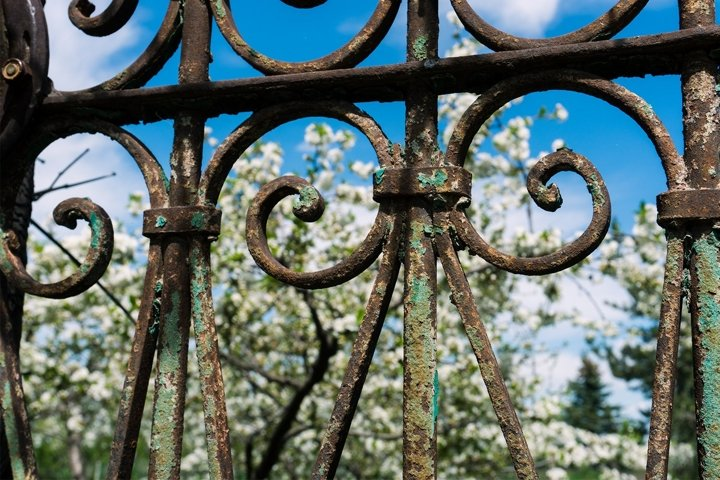 Rusty Old Gate with Blue Sky & Blossoms Photo